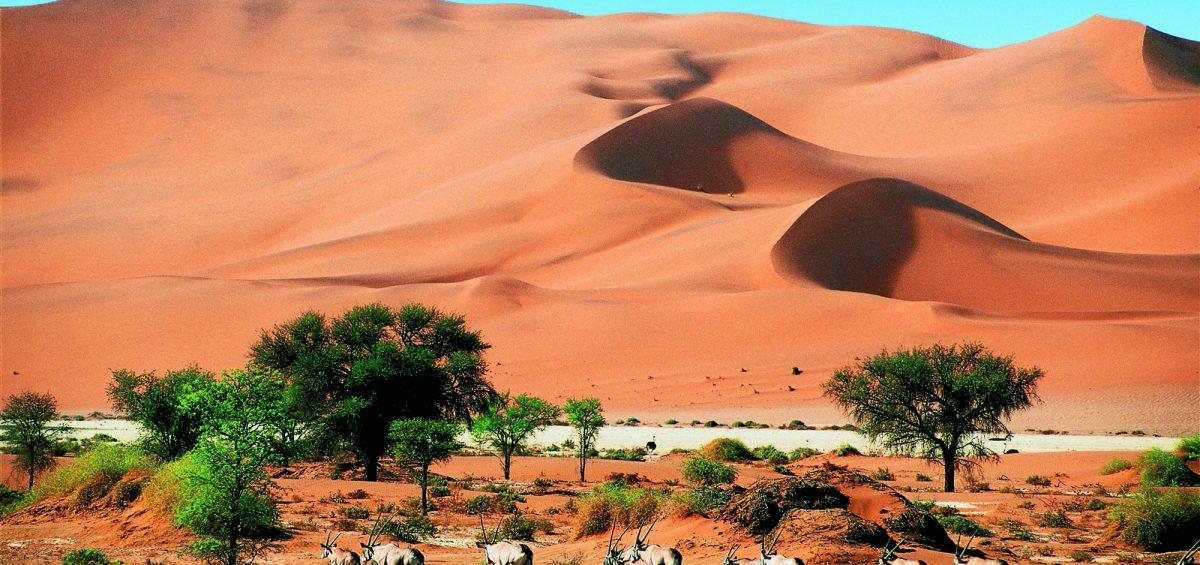 Abenteuer Afrika:  Treffpunkt Wasserloch