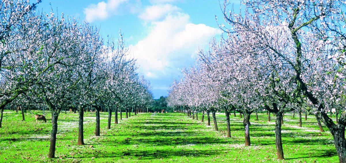 Wo der Frühling früher kommt: Blütenzauber zum Schnäppchenpreis