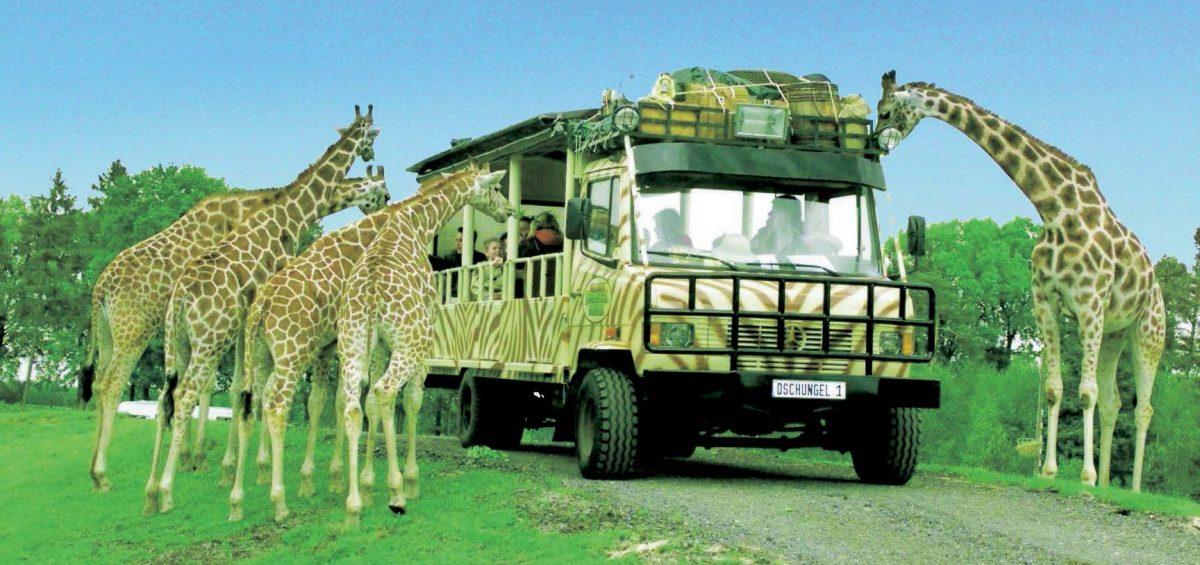 Afrika-Safari in der Lüneburger Heide: Lodge-Urlaub an der Leine