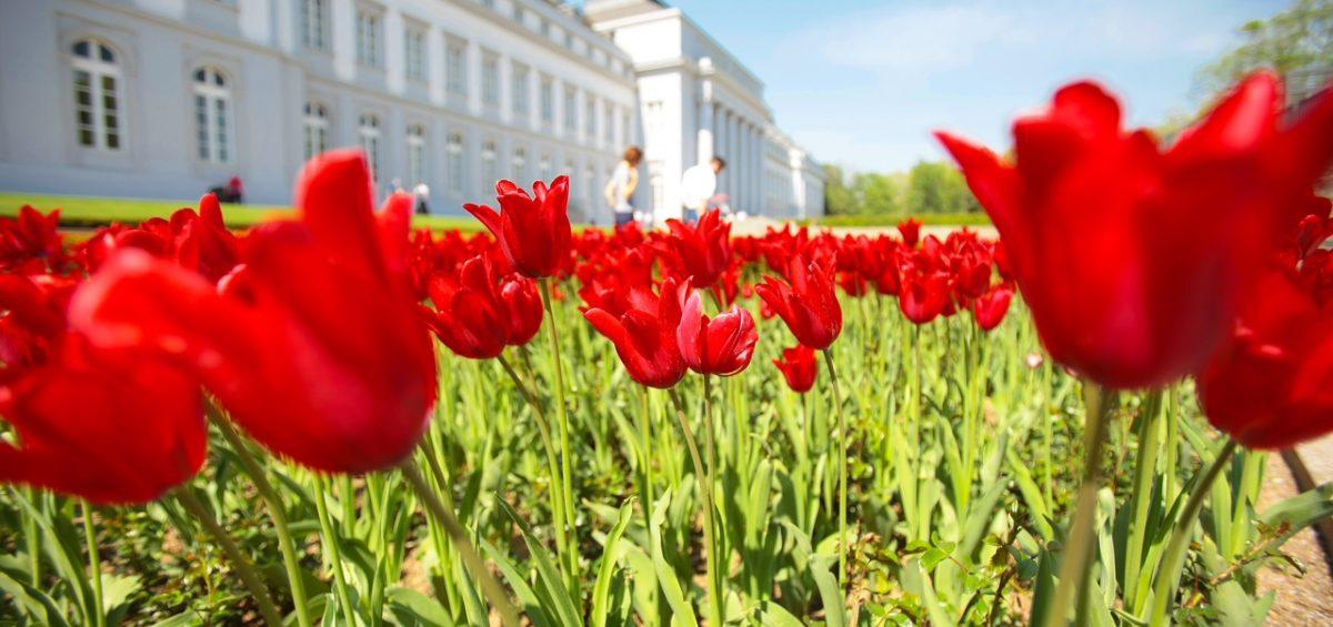 Foto: Foto: Koblenz-Touristik/Piel