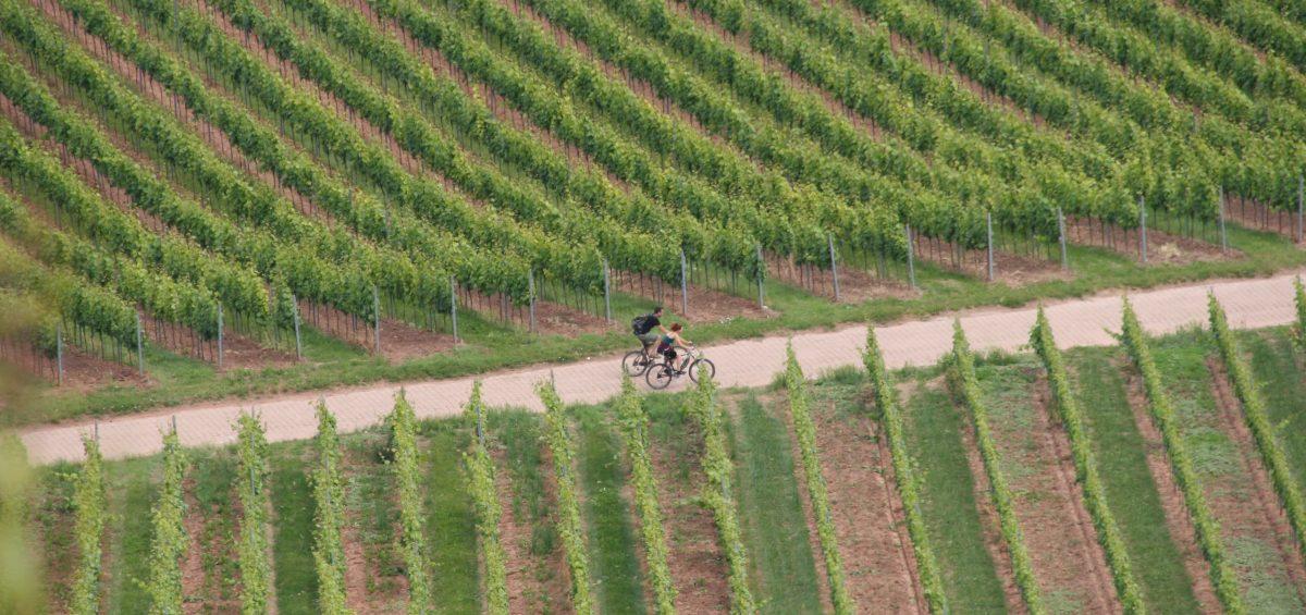 Radeln durch die Reben: An der Nahe und in Rheinhessen kommen E-Biker dem Weinbau nahe. Foto: ideemedia Foto: ideemedia